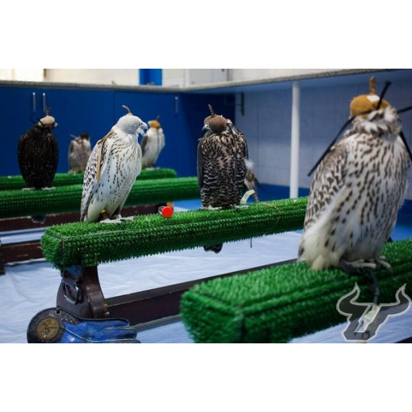 astroturf for birds of prey